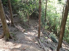 林道はここまで(古くからの作業道へ)