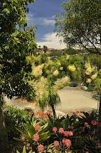 Photo: San Diego Botanical Gardens