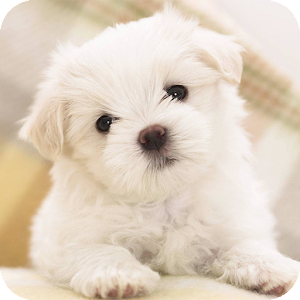 Cute Puppy Dog Wallpapers Hd 2 0 Apk Androidappsapk Co