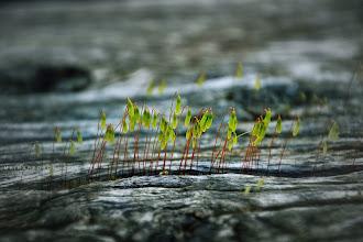 Photo: Springtime ...