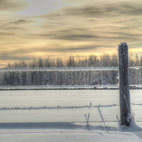 Frost by Jacob Hoedl - Landscapes Prairies, Meadows & Fields ( wind, cold, sunset, snow, frost )