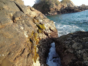 Photo: Tyhlety kameny byly pokrytý různě velikýma krabíkama.