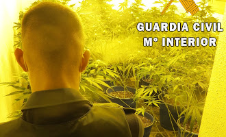Encuentran marihuana en dos viviendas con menores en Adra