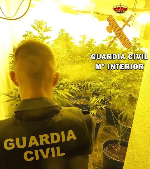 Un agente de la Guardia Civil en la plantación.