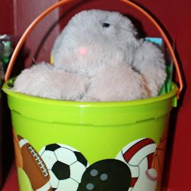 Easter Bucket by Sandy Stevens Krassinger - Public Holidays Easter ( bucket, balls, handle, easter, holiday, bunny )
