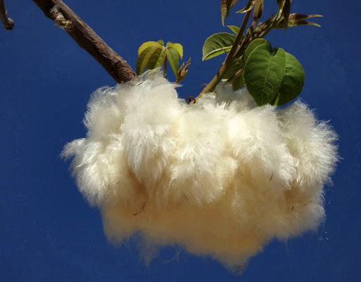 Flower soft di donnavventura