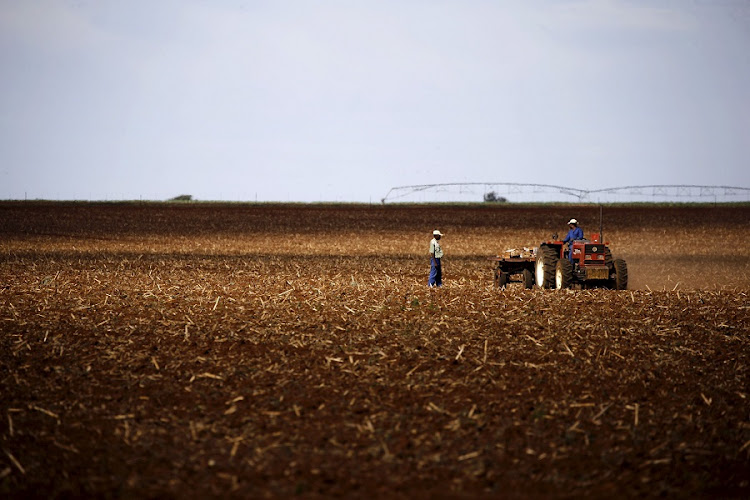 Farmers work on a field outside Lichtenburg, a maize-growing area in the North West.  Picture: REUTERS