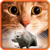 Games for Cat mouse on screen
