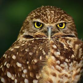 by Shawn Thomas - Animals Birds