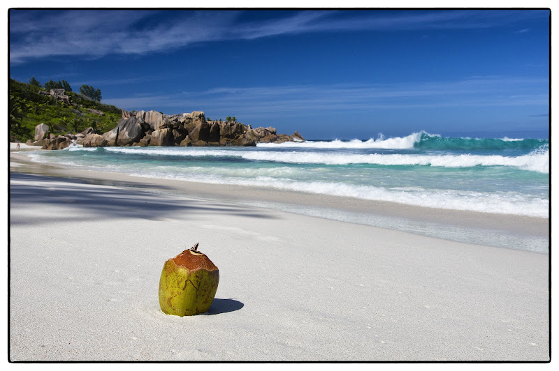 Coconut di Roberto Simonazzi