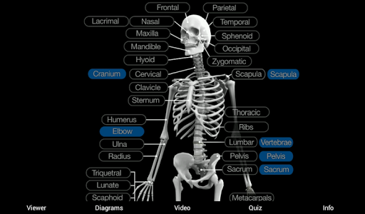 Skeletal Anatomy 3d Apk Download Apkpure