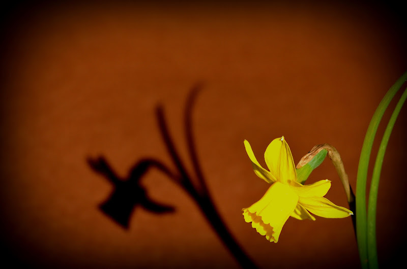 Narciso... di margin
