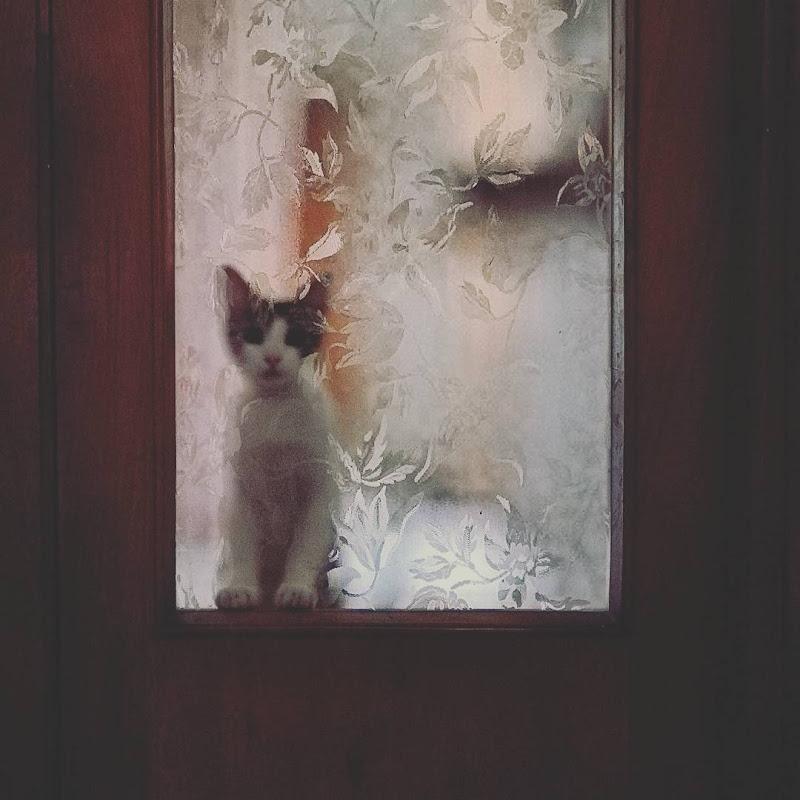 Open the door! di Maurizio Valentini