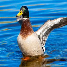 by Helen Andrews - Animals Birds