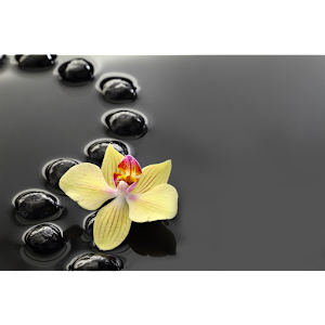 the zen habits book pdf