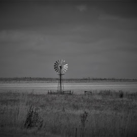 by Orpa Wessels - Landscapes Prairies, Meadows & Fields (  )