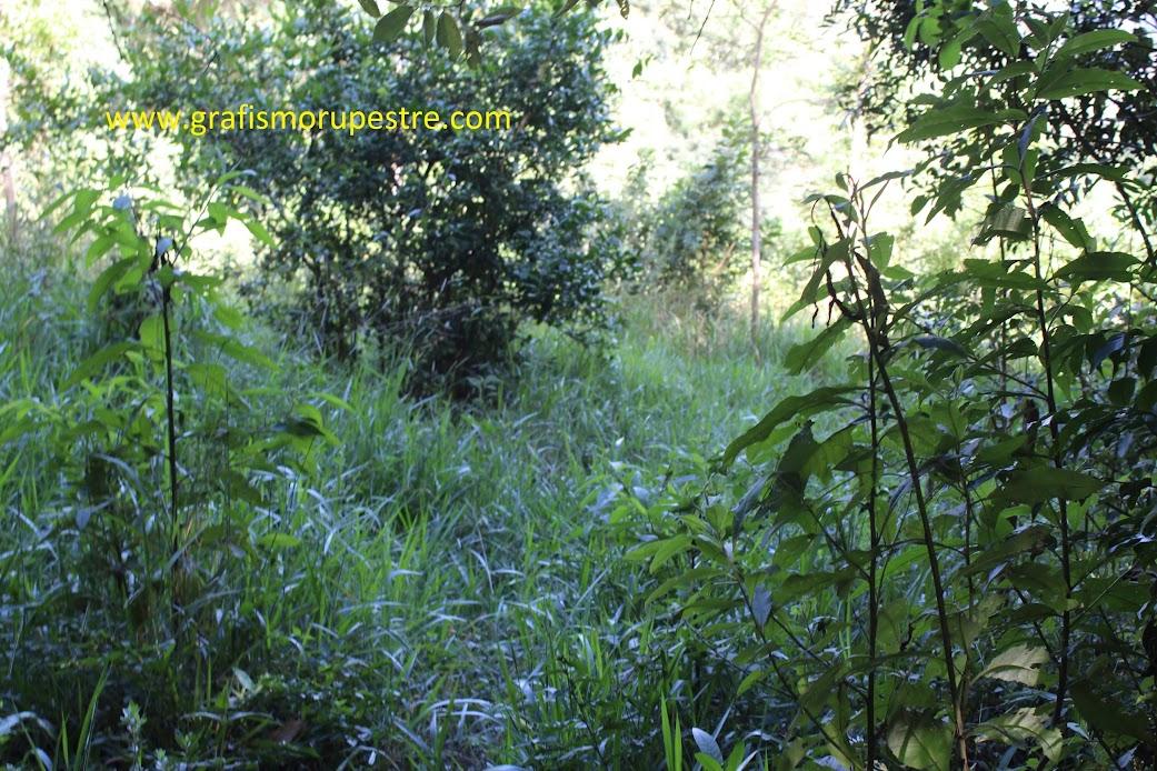 Alguns metros do quebra corpo siga pela direita em uma bifurcação da trilha.