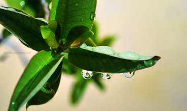 "Photo: #PHOTOGRAPHY  ""Drops"" (Nikon D3100) This morning on my balcony, after the rain."