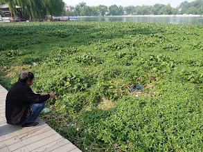 Photo: Beijing - Houhai lake bank with fisherman