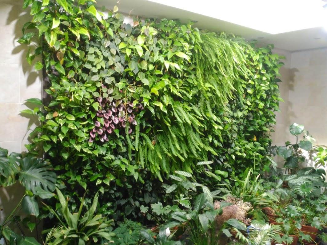 jardín vertical de interior en Alicante