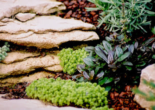 Photo: Sedums, lavendar and Chocolate Chip Bugleweed blend stonework into the gardens.