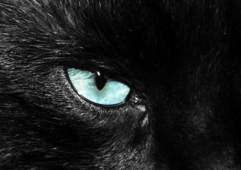 ...Black cat..... superstizione o realtà?? di sauropari