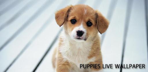 Puppies Live Wallpaper Apps On Google Play
