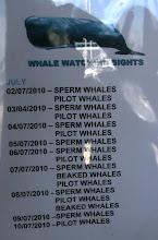 """Photo: Valasretkien """"saalista"""" eri päivänä (me olimme retkellä 6/7 ja näimme siis kaskelotteja eli spermwhales)"""