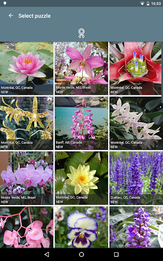 Jigsaw Puzzle: Flowers screenshot 17