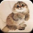 Cute Cat Wallpaper APK