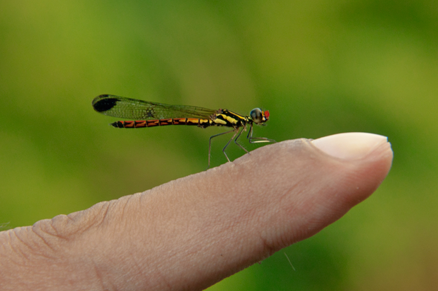 .:: I'M SO HORNY ::. by Adee Irawan - Animals Insects & Spiders