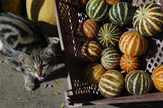 Photo: Pumpkin