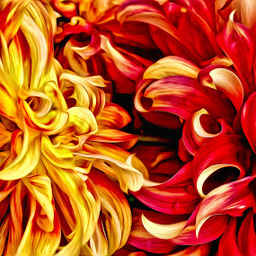 flaming flowers by Curtis Jones - Nature Up Close Flowers - 2011-2013 ( red, yellow, flowers )