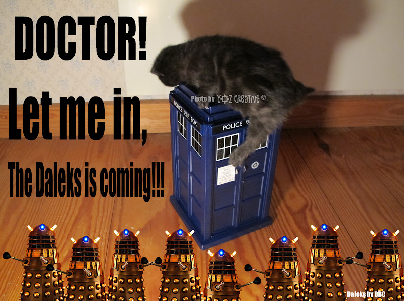 Photo: Kitty already beeing approached by the Daleks! #caturday #DoctorWho #DoctorWhoDay #AsylumOfTheDaleks   Photo specially made for today whovians ;-)  Y aka +YOZcreative #twt