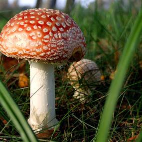 by Oleg Verjovkin - Nature Up Close Mushrooms & Fungi ( mushroom )