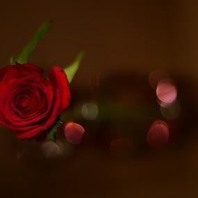 Rose..... by Jagadeesh Mummigatti - Flowers Single Flower