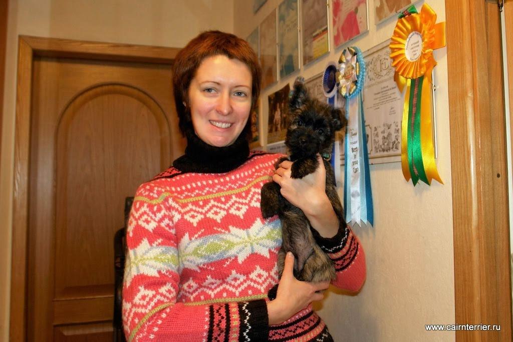Фото щенка керн терьера из дома Еливс у владельца на руках