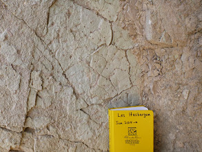 Photo: Golden Canyon. Trace fossils?