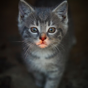by Andrew Lawlor - Animals - Cats Kittens