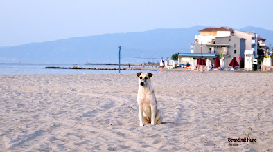 Photo: Strand mit Hund in Paralia, Pieria, Greece