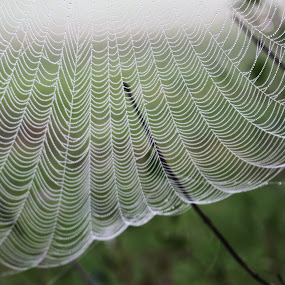 Foggy Morning by RichandCheryl Shaffer - Nature Up Close Webs