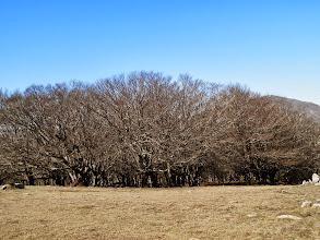 Photo: la belle forêt de hêtres