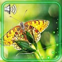 Butterflies and Flowers icon