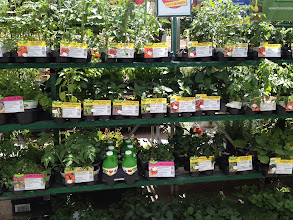 Photo: When we got to Walmart we checked out all the garden plants... however decided to wait till the day we were going to plant to come back and buy.