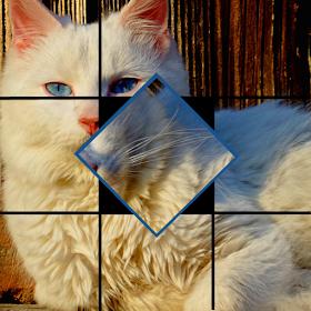 Tap & Turn: Cats &Kittens Free