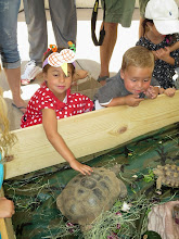 Photo: Turtle and Tortoise displays