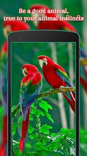 Animals & Birds wallpaper - náhled