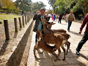 Photo: Cutest critters (deer park at Kasuga Shinto Shrine in Nara)