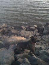 Photo: Malia at Cataract Lake in Arizona