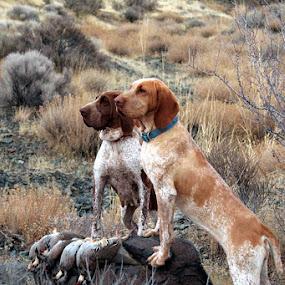 Sadie & Alena by Ralph MInnitte - Animals - Dogs Portraits